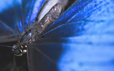 Connaissez-vous l'effet papillon?