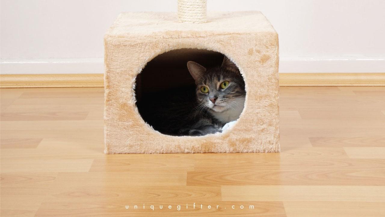 20 Unique Cat Beds For Your Fancy Feline Unique Gifter