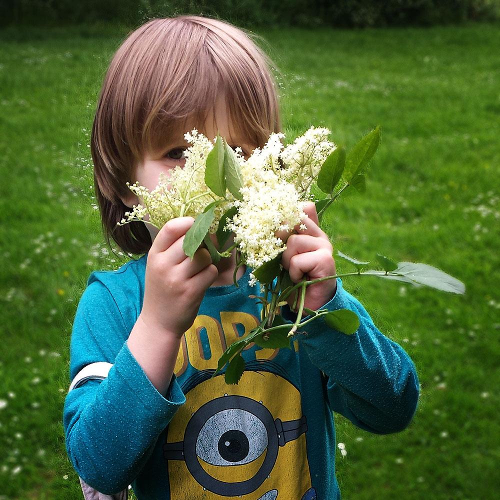 little elderflower harvester