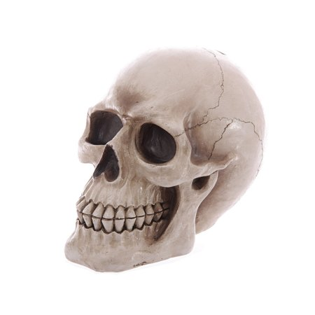 large lifesize human skull money box 01