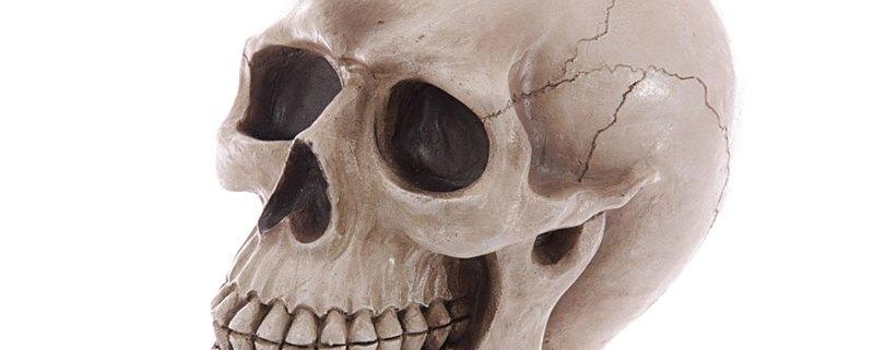 large lifesize human skull money box 01