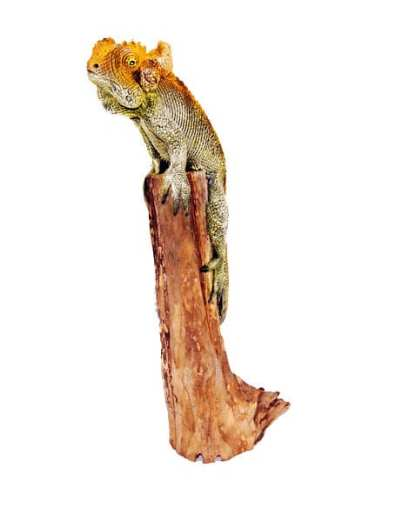 Cameleon on a log
