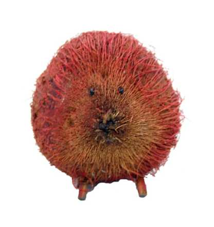 Red Coconut Porcupine
