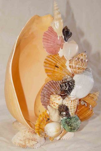 Seashell Arts and Crafts