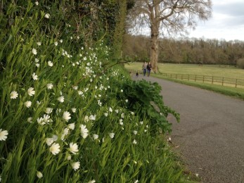 Stitchworts in the park