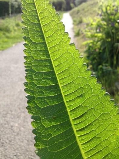 A rather striking leaf