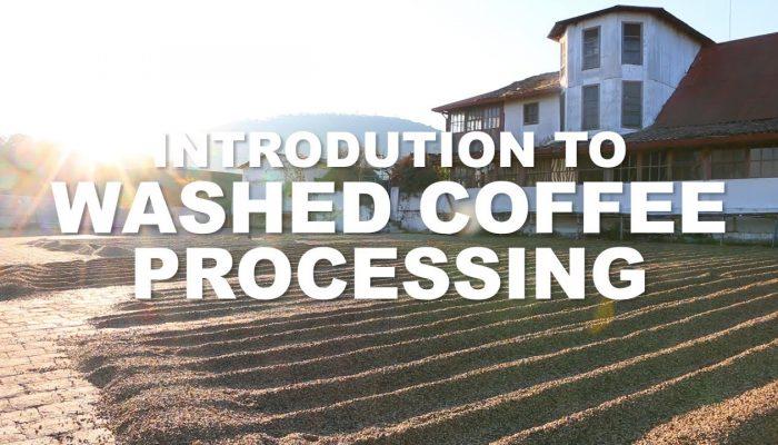 San Felipe Coffee Processing