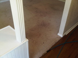 Carpet Before Cleaning | Home Carpet Cleaning