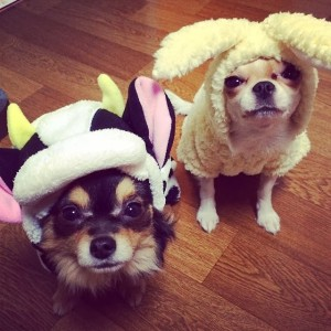 fx_amber_dogs
