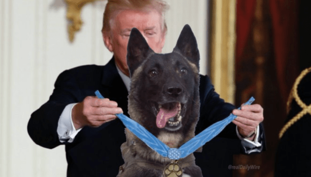 The meme becomes a reality as President Trump honors the hero dog Conan at the White House today.