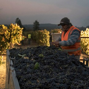 California's Vineyard Workers Already Faced Long Hours, Low Pay, and Harsh Conditions. Then Came Trump's Immigration Crackdown.