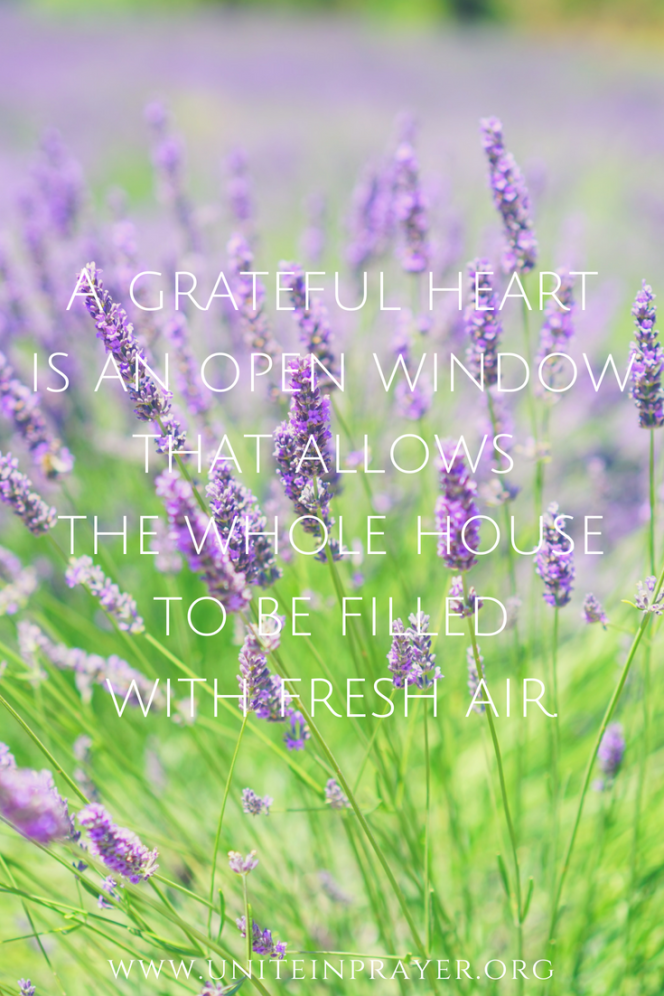 Copy of A grateful heartis an open windowthat allows the whole houseto be filledwith fresh air.Just unlockand lift…pinterest