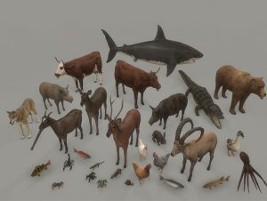 Animal pack deluxe