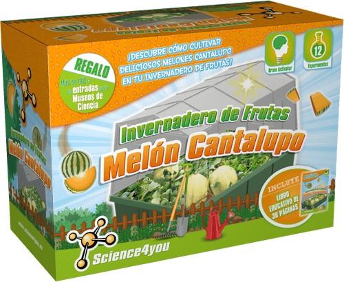 Invernadero de Frutas - Melón Cantalupo