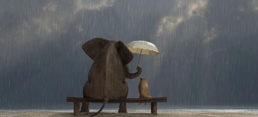 ¿Qué tiene que ver la gentileza con el amor?