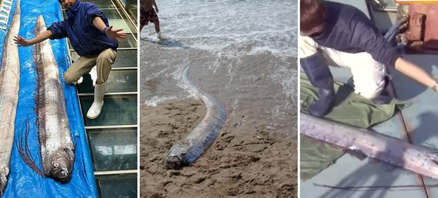 """El """"pez del fin del mundo"""" suscita rumores de terremotos y tsunamis"""