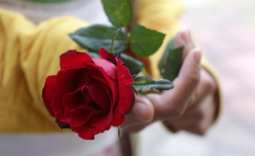 Viernes 28 de mayo: no olvides tu rosa para consagrar