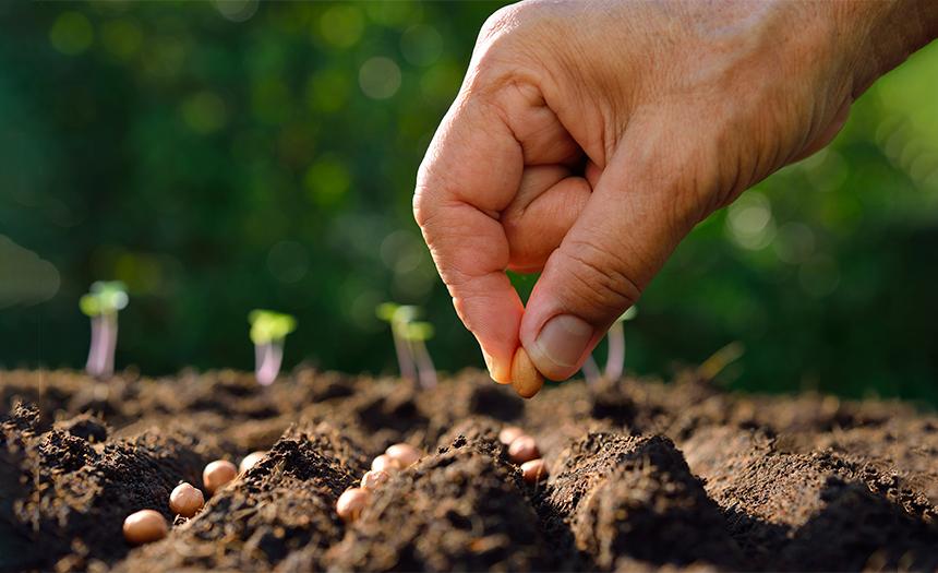 ¿Qué tipo de tierra eres para la semilla de Dios?