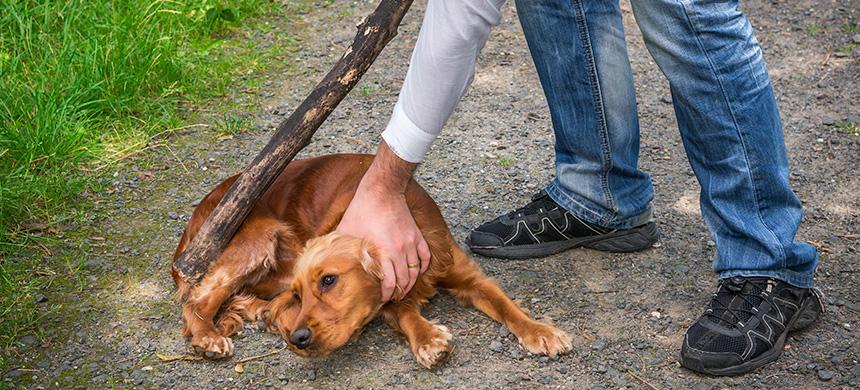 Casos de maltrato animal pueden ser indicios de violencia doméstica: PAOT
