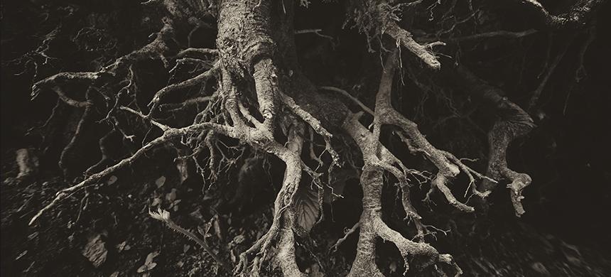 ¿Cuál es la raíz de todos los males del ser humano?