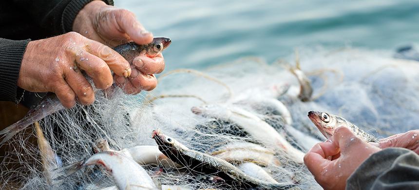 Costumbres de la Biblia: la pesca