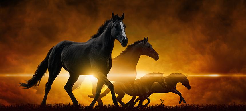 Jinetes del Apocalipsis: el caballo negro