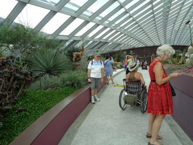 Inside the Flower Dome at Gardens by the Bay, Singapore. Shows a man in a wheelchair looking at the plant display