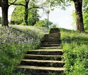 Looking up a long flight of stone steps in a park. No handrails.