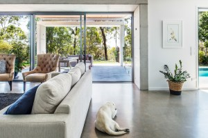 A white labrador dog sleeps in the foreground and in the background the door is open showing level access to the alfresco.