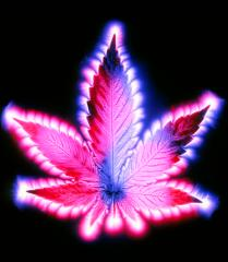 1-kirlian-photograph-of-a-leaf-of-cannabis-sativa-garion-hutchings