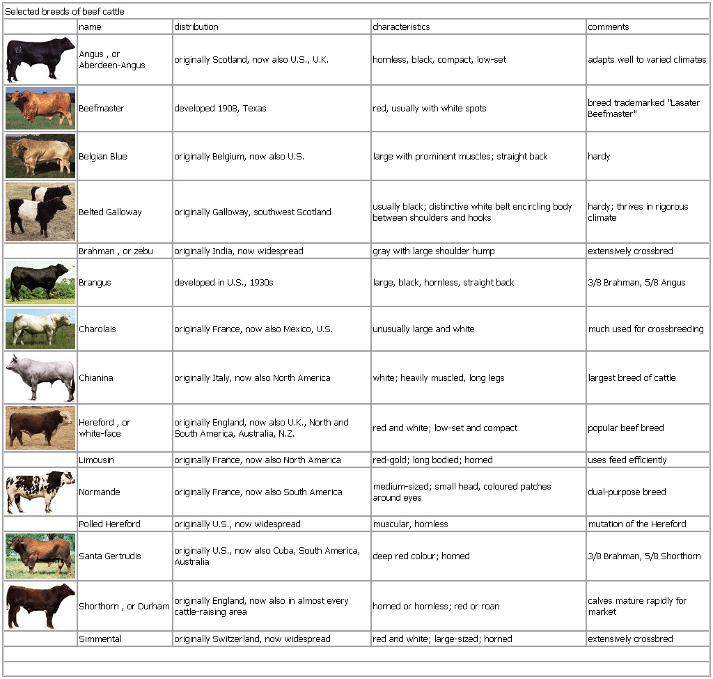 Selected Breeds Of Beef Cattle