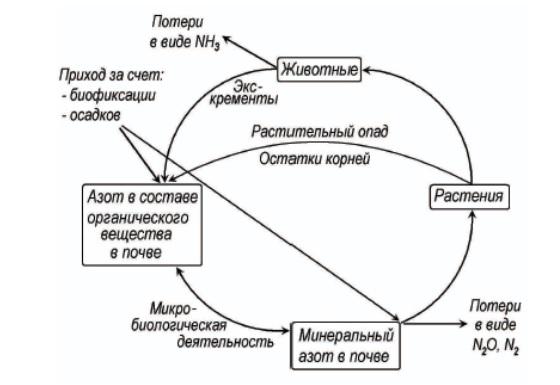 Цикл азота в биосфере при естественном состоянии почвы