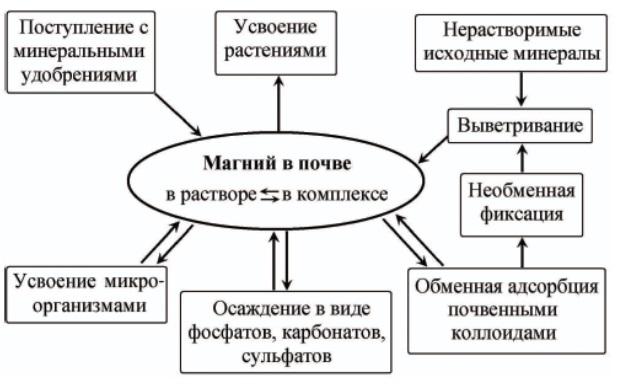 Схема трансформации магния в почве