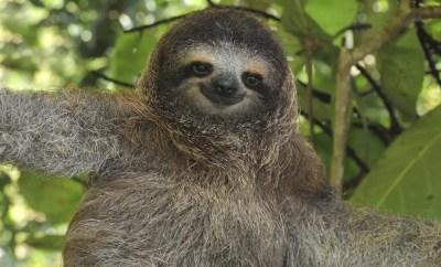 Dangers of Sloth