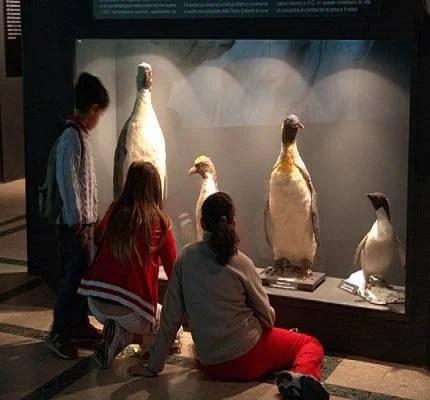 Bambini guardano animali