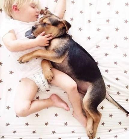 amicizia bimbo cane