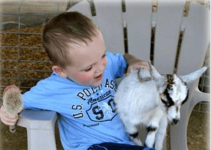 bimbo con capra