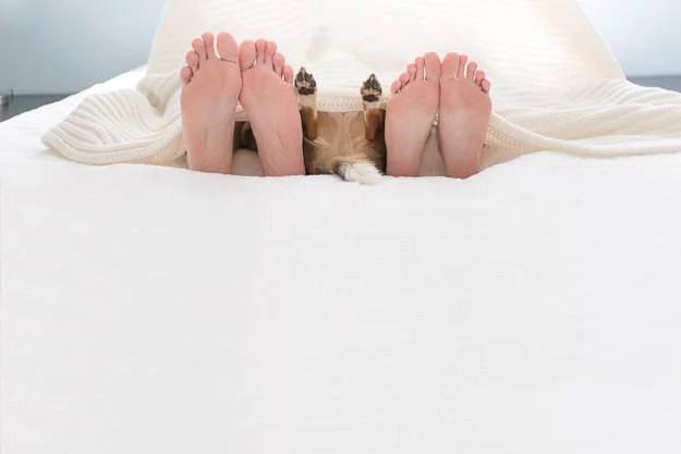 piedi degli uomini e del cane sul letto