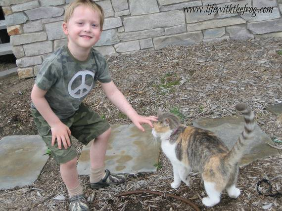 bimbo gioca col gatto