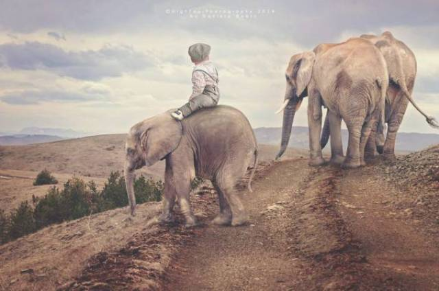 bimbo in groppa elefante
