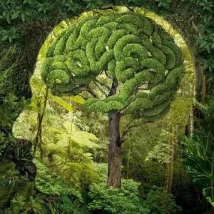 inteligencia-naturalista