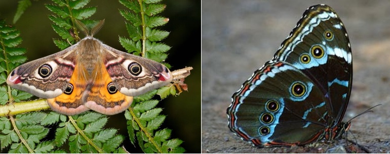 Figura Mariposa e Borboleta - A Simbologia Das Mariposas