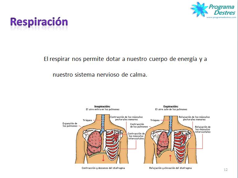 Ritmo respiratorio y procesos de ansiedad