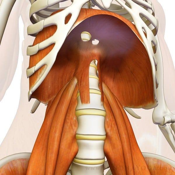 ¿Qué te puede aportar una respiración controlada?