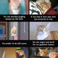 Purrfectly Funny Cat Memes