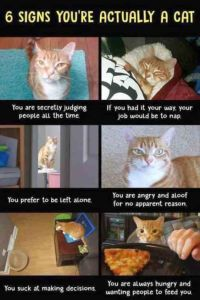 28 Hilarious and Funny cat memes that are cute clean laugh so hard 3