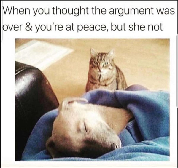 Funny Cat and Dog Memes 2020