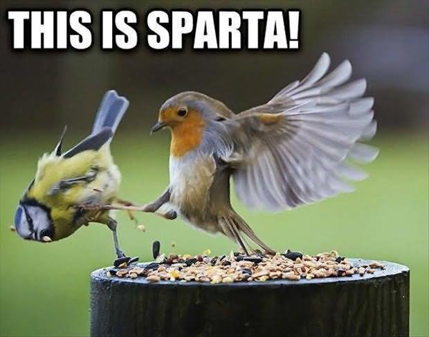 this is sparta funny bird meme image8346558737597115695