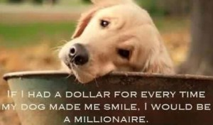 Funny Golden Retriever Memes, Funny Golden Retriever Memes, Funny Dog Video