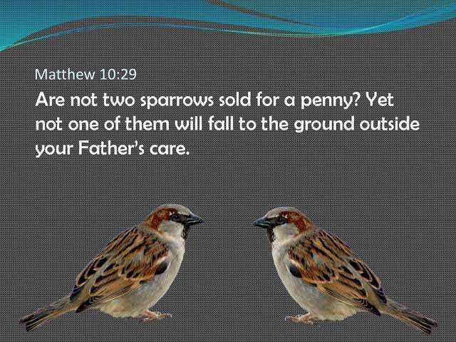 Daily Devotional: Fear not, are not two Sparrows sold for a farthing?